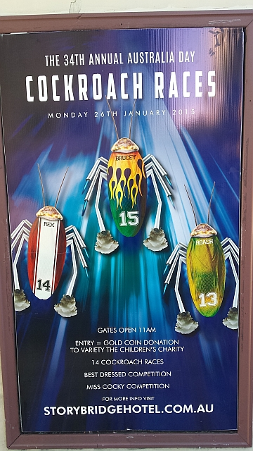 Living Brisbane cockroach race flyer Australia Day